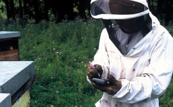 養蜂とITの融合時代へイメージ画像