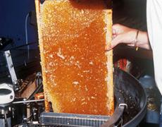 ニュージーランドの養蜂家とハチミツイメージ画像