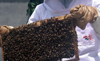 日本で消費されるハチミツの8割以上が中国産ですイメージ画像