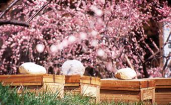 ミツバチが花粉を運びますイメージ画像