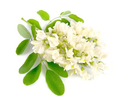 アカシア花
